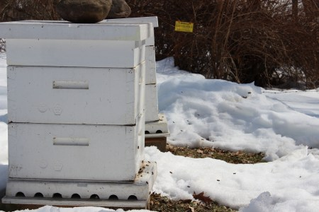 Beehives!