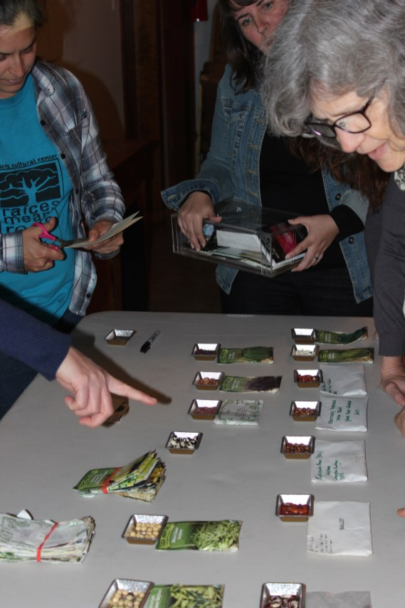 Pointing out the diferences in bean seed varieties.