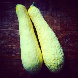 PM straightneck yellow squash
