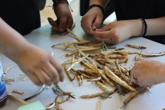Hands-on learning, how to save bean seeds!