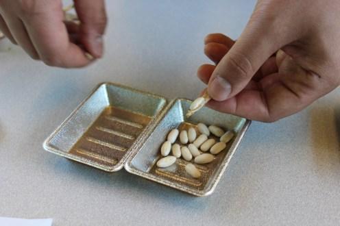 Shelling green bean seeds.