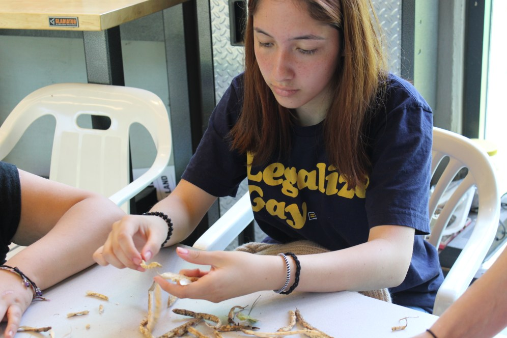 Raíces Garden Crew and EcoAction Team Member Kira shelling and sorting beans grown in the Raíces gardens last season.