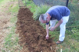 Planting beans.