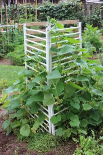 3 varieties of cucumbers