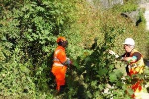 Biodiverse Railway Lineside