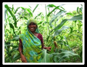 irrigation saison sèche