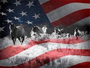 July 4th Horses