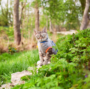 take your cat hiking!