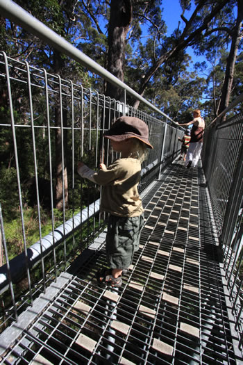 Valley Of The Giants Treetop Walk Walpole Wilderness Area