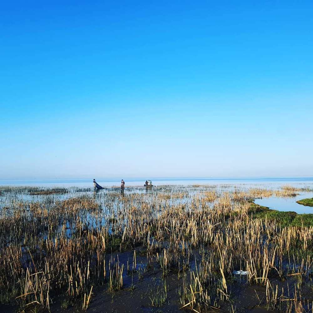 Fraser estuary team setting nets