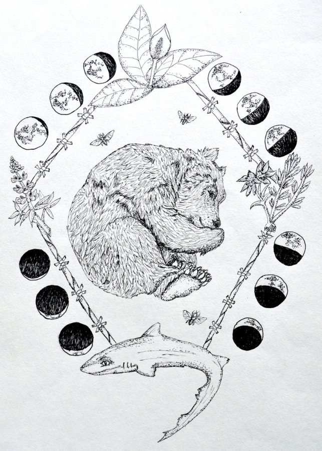 Bear illustration and flaura and fauna: illustration by Lauren Henson