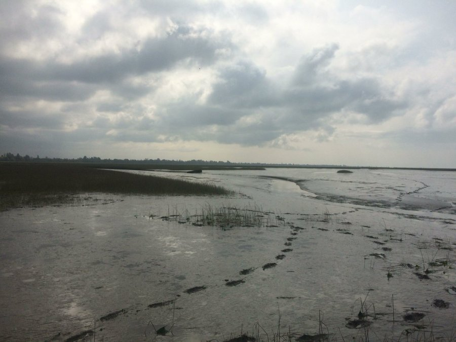 This is an image of a marshy stretch of sand with tall green grass sprouting through on the left. It is a grey, cloudy day and footprints in the sand go off into the distance.