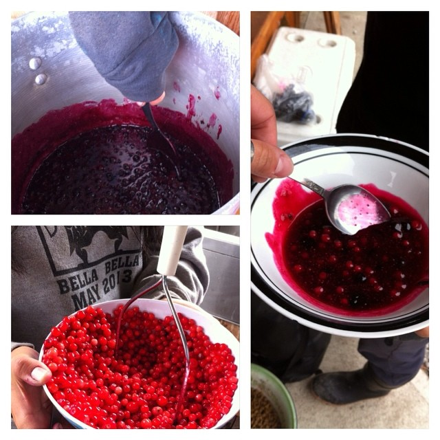 Making currant-salal and huckleberry jams with Qqs at Koeye Camp