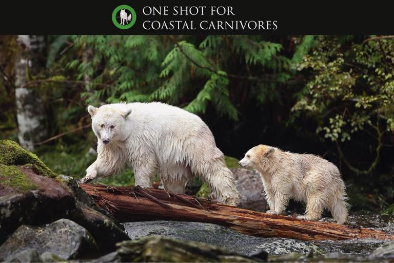 Shot for Coastal Carnivores Feature Spirit Bear Mother and Cub