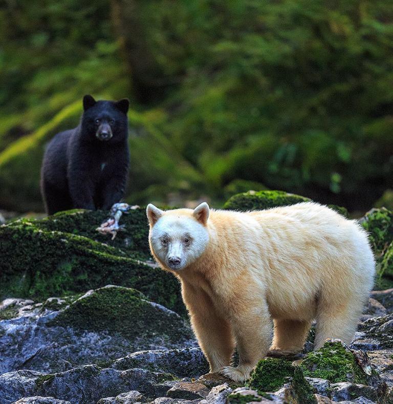Join wildlife photographer John Marriott