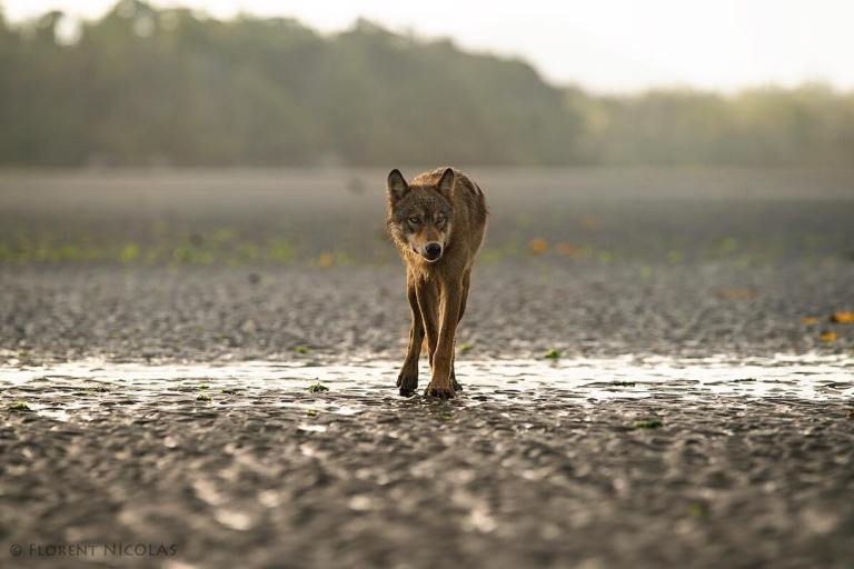 The Unprotected Coastal Carnivores