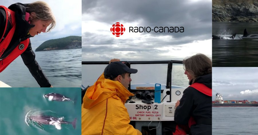 A montage of CBC Radio images of Misty MacDuffee