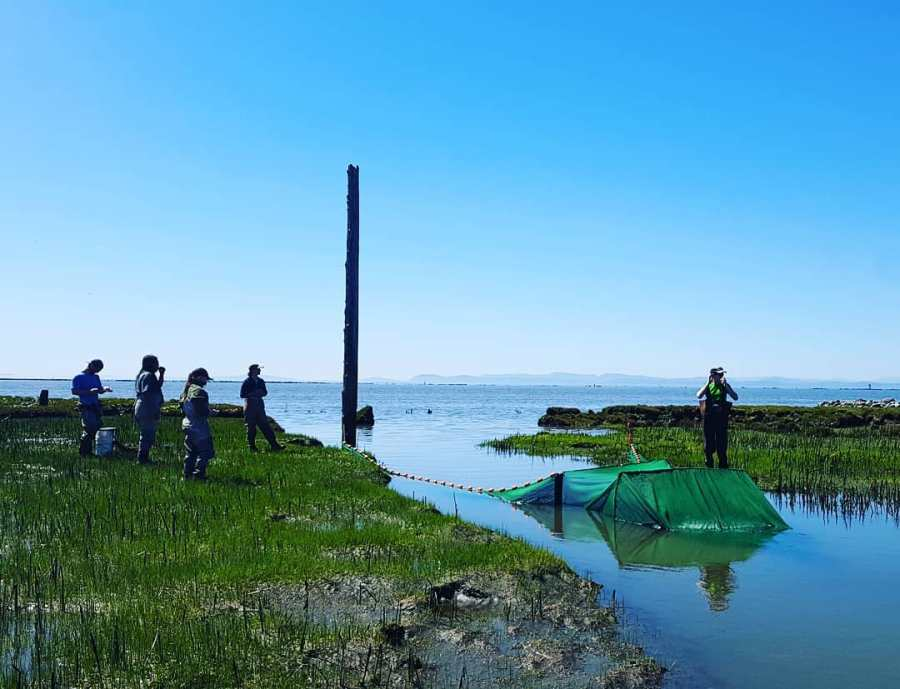 Four Raincoast staff stand on one bank while another stands on the opposite bank and watch a green net across the Fraser river