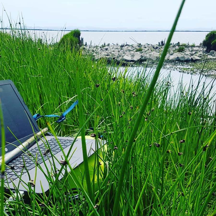 Computer and a pole visible among stalks of green grass by the banks of water