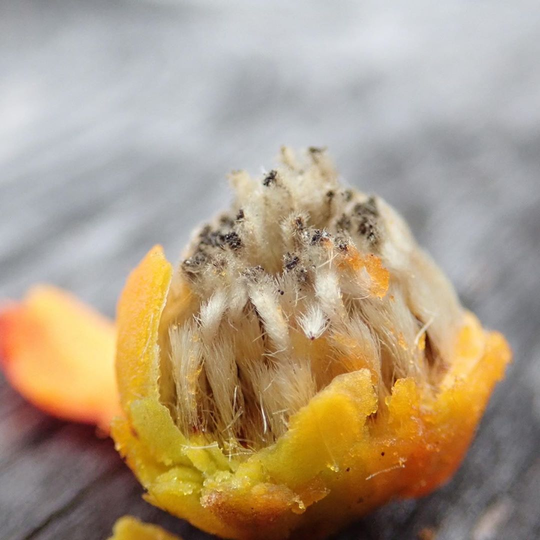 Close up of partially peeled fruit