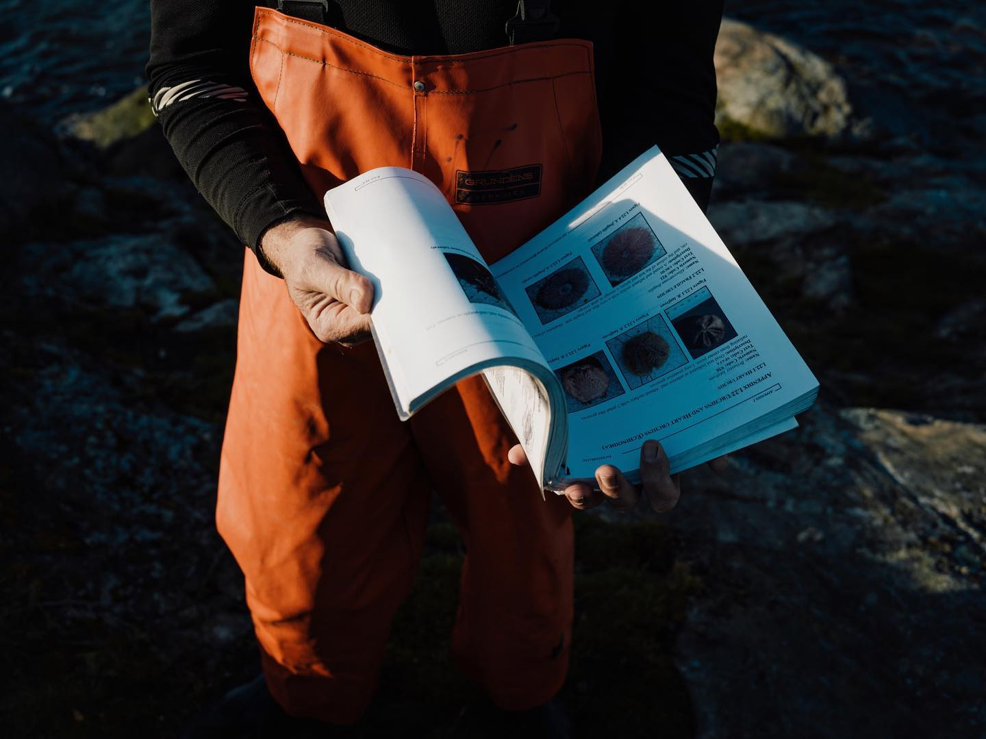 Hands and torso of a person in orange overalls holding a book with small square photographs