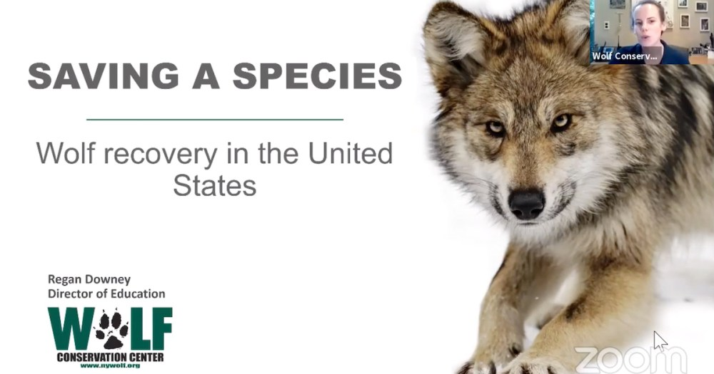 Wolf Conservation Center Wolf School episode 02 - Conservation of endangered Mexican grey and red wolves in the United States