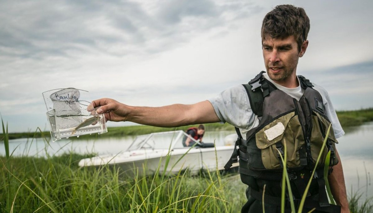 Dave Scott stand in the Fraser River Estuary holding up a tiny salmon in a viewfinder.