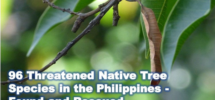 96 Threatened Native Tree Species in the Philippines – Found and Rescued
