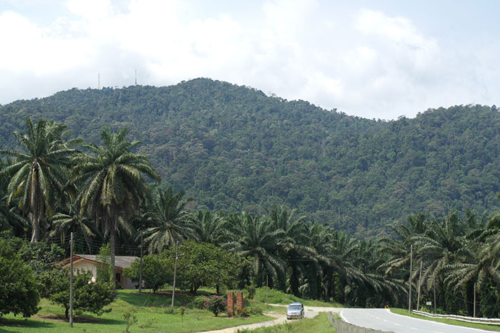 gunung pulai mountain