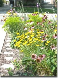 Rain garden in full bloom