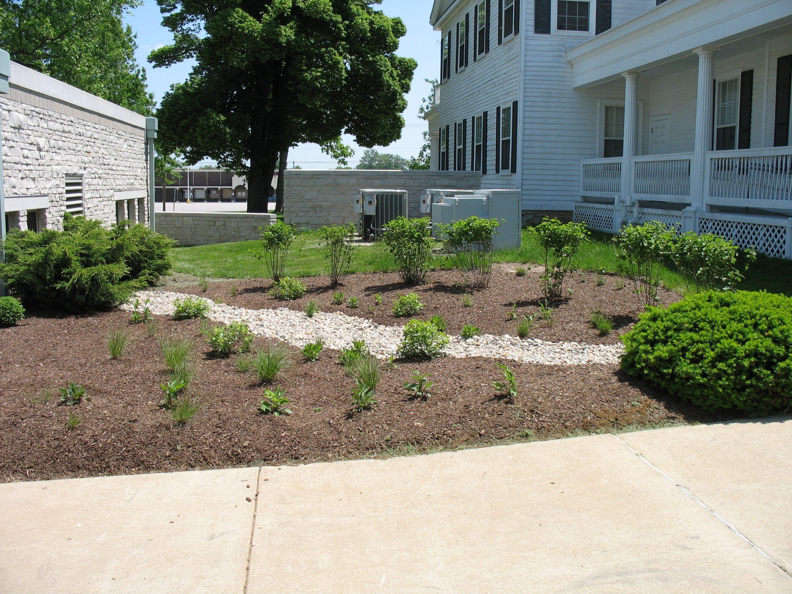 Newly planted rain garden at school
