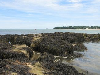 Rock pools at St Helens - Isle of Wight
