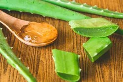 Aloe vera help to soften the skin on your hands