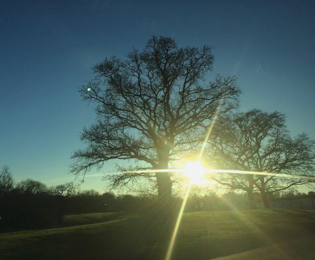 trees in low sun