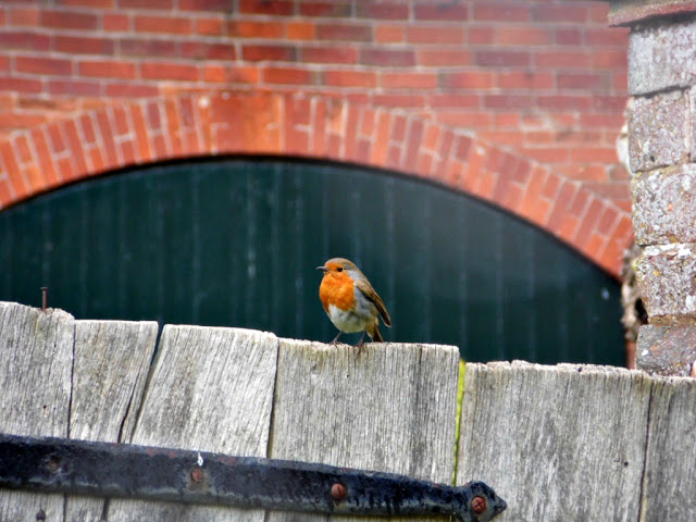 robin on the gate at Packwood House