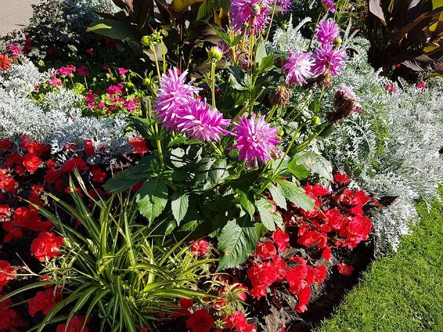 a flower bed of red, white and pink flowers