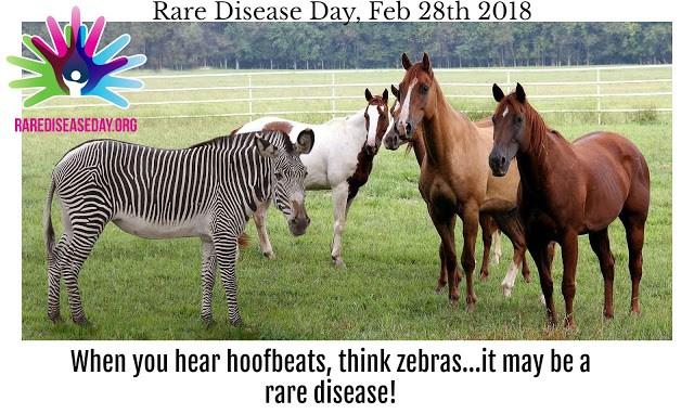 a zebra in a field of horses