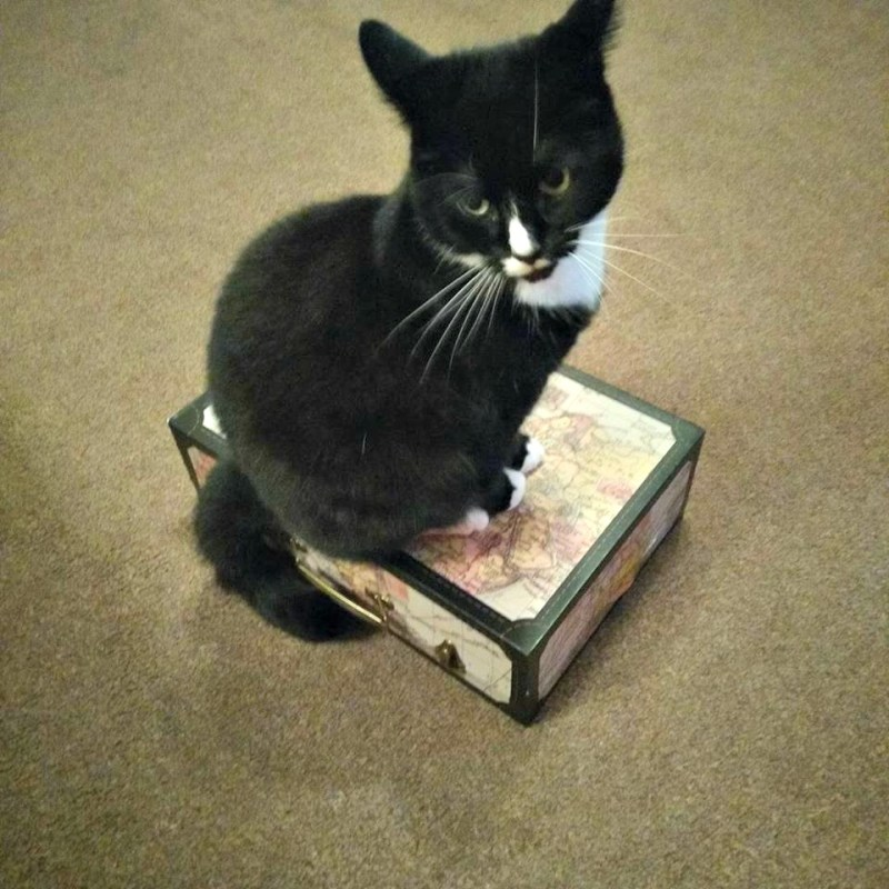 black and white cat sitting on a cardboard suitcase.