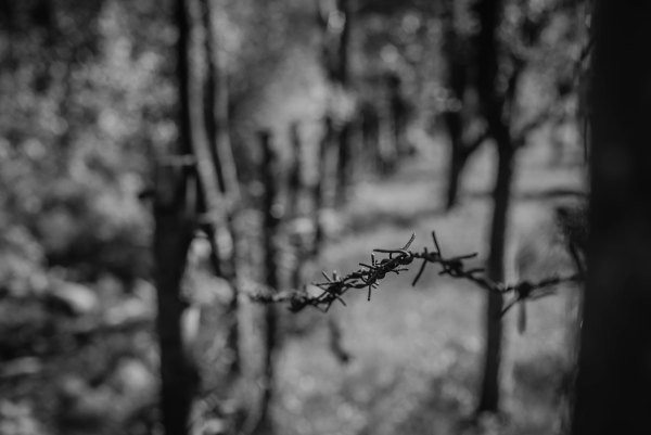 black and white photo of a piece of barbed wire stretched between two tree which are out of focus