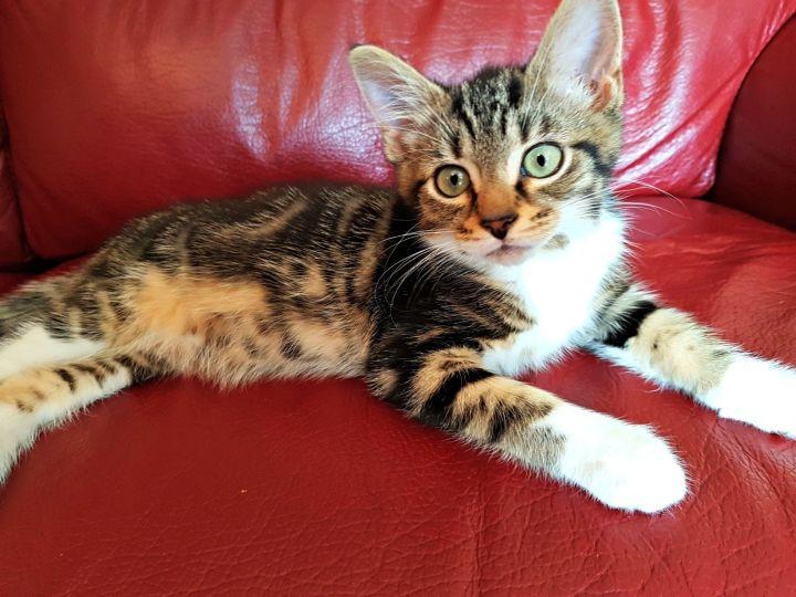 a kitten lying on the settee