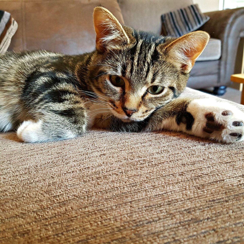 kitten lying on the settee
