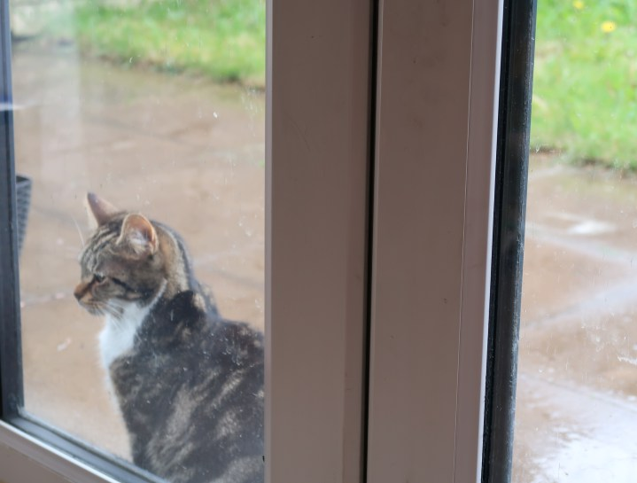 a cat looking through a door while outside in the rain.