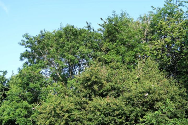 The woods from a bigger distance with a blue sky background