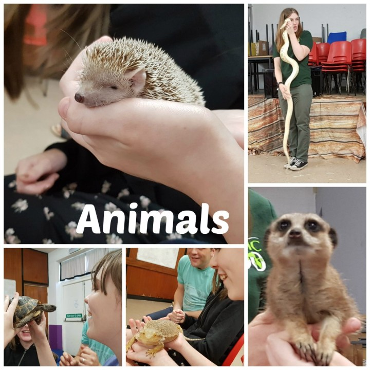 animals from the exotic zoo