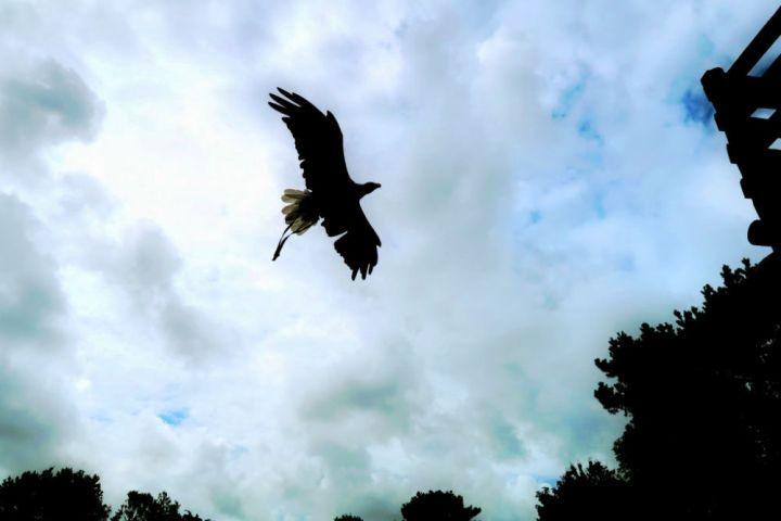 An eagle flying against a cloudy sky