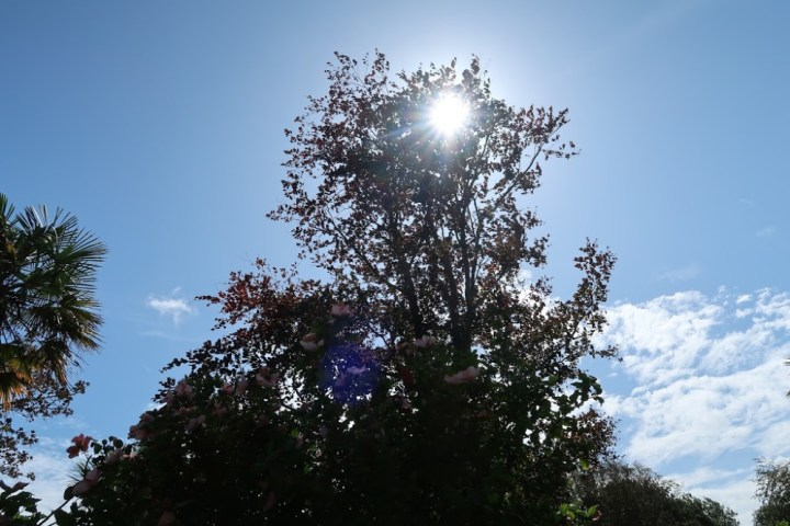 A large tree hiding the rays of a glowing sun
