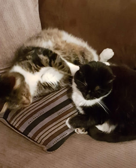 two cats together on the settee