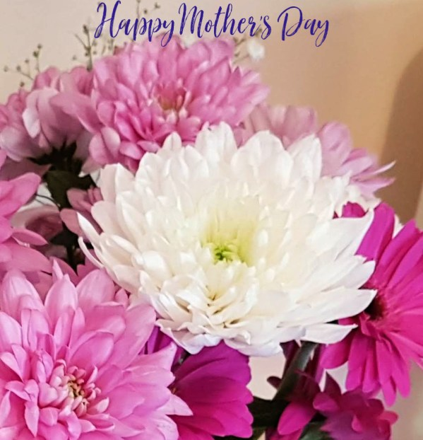 close up of chrysanthemums in pink and white and the words Happy Mothers Day