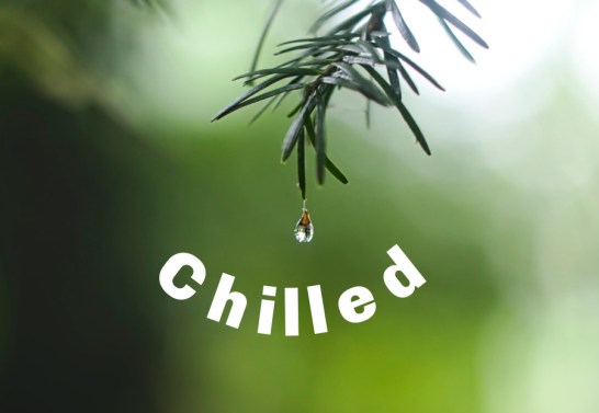 photo of a drop of rain falling from a leaf and the word chilled.