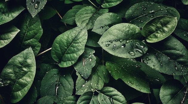 Plants, Diseases, Parasite, Mera Maali, Lockdown, Urban, Gardening, Service, Podcast, Leaves, Consultancy